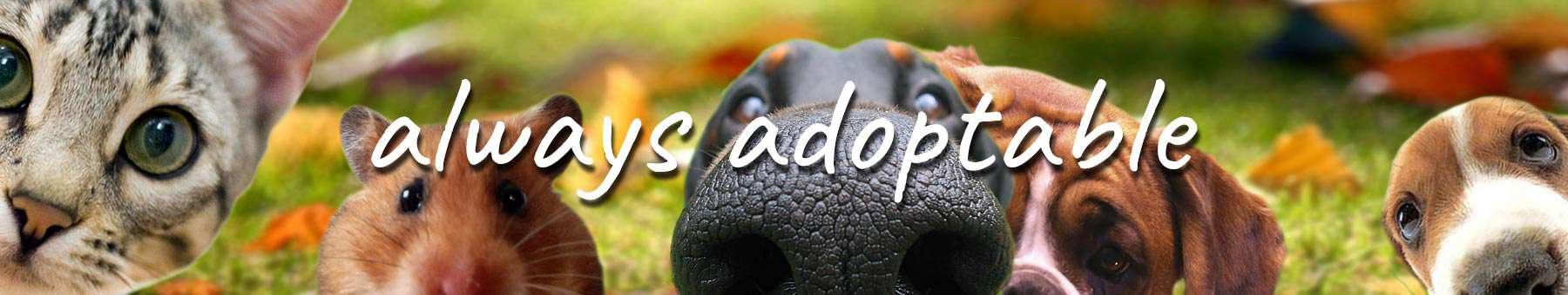 always adoptable