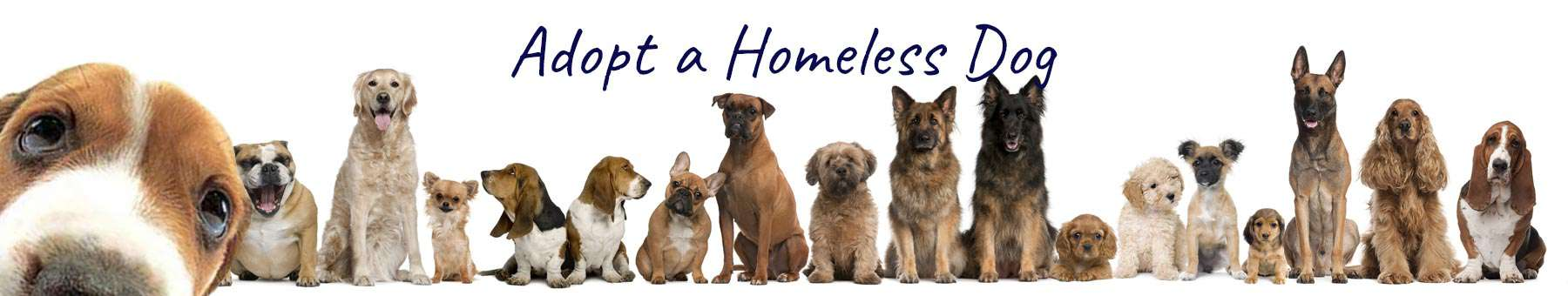 adopt a homeless dog