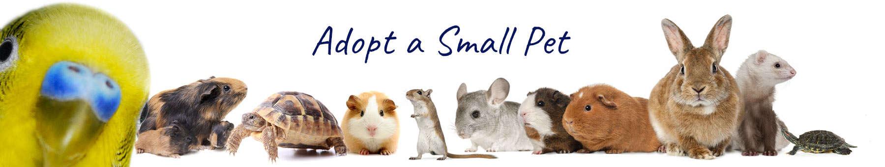 adopt a small pet