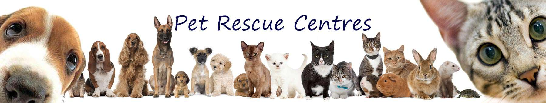 county archive of animal rescue and rehoming organisations