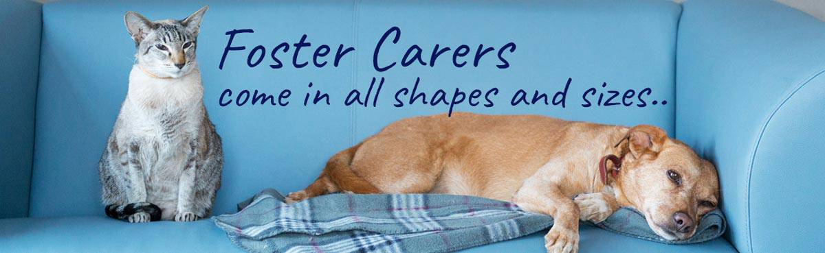 Foster carers for pets