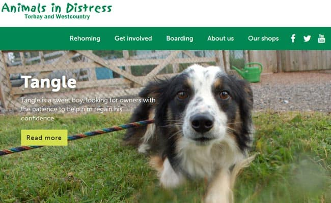 Animals in Distress, Newton Abbot
