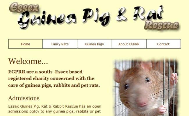 Essex Guinea Pig and Rat Rescue, Benfleet