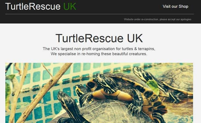 Turtle Rescue and Re-Homing Centre, Harwich
