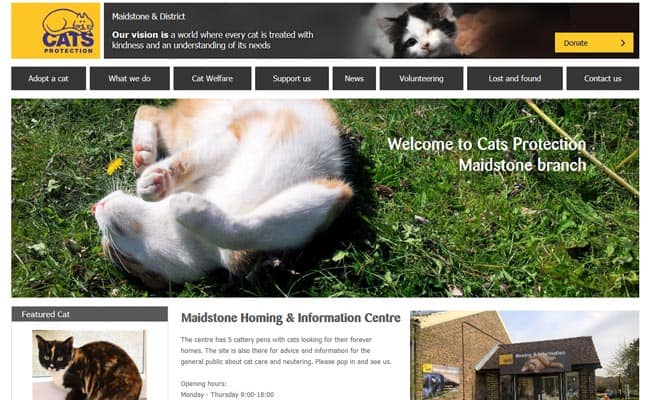 Cats Protection, Maidstone