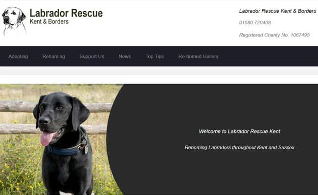 Labrador Rescue Kent and Borders, Cranbrook