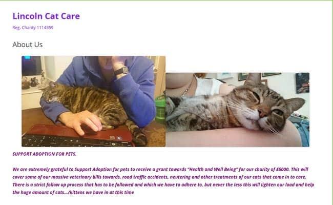 Lincoln Cat Care, Lincoln