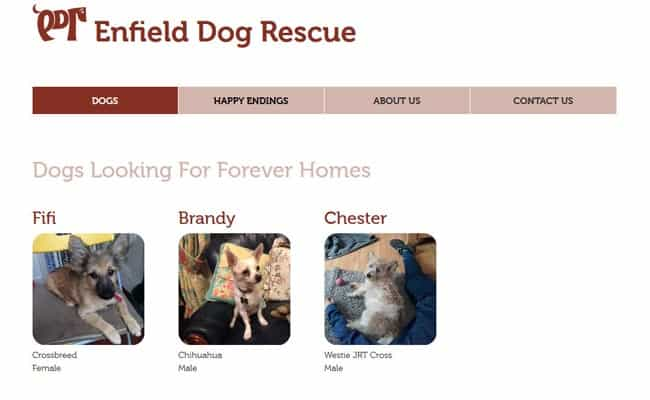 Enfield Dog Rescue, Enfield