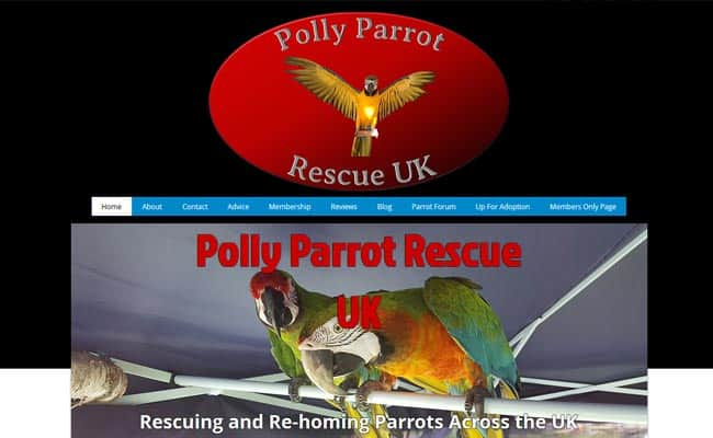 Polly Parrot Rescue UK, Manchester