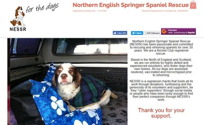 Northern English Springer Spaniel Rescue, Morpeth