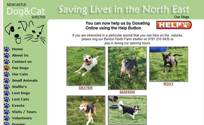 Newcastle Dog and Cat Shelter, Benton North Farm