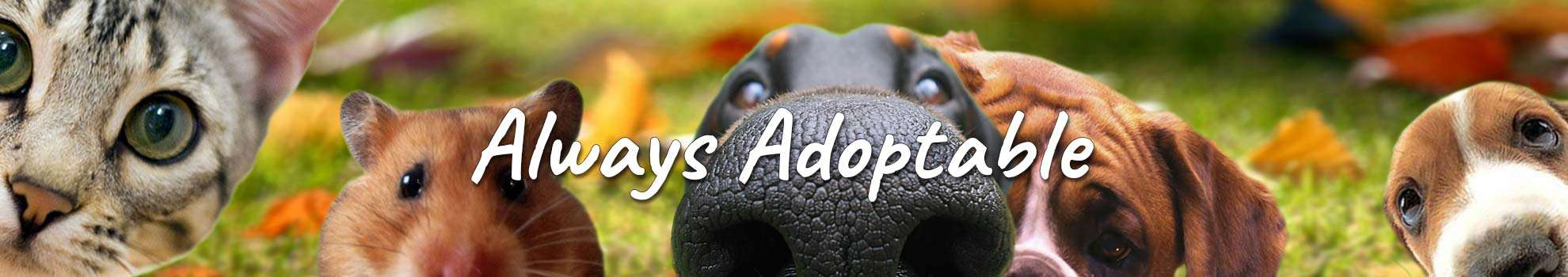Always adoptable - rehoming unwanted pets